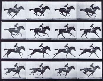 Muybridge Horse Image.jpg