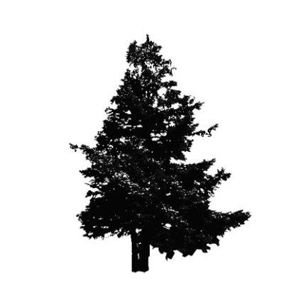 arbre-sapin-silhouette-museumtextures.com-1310121254.jpg