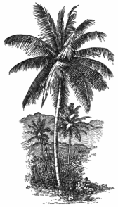 Fotg_cocoa_d031_the_coco_nut_palm.png